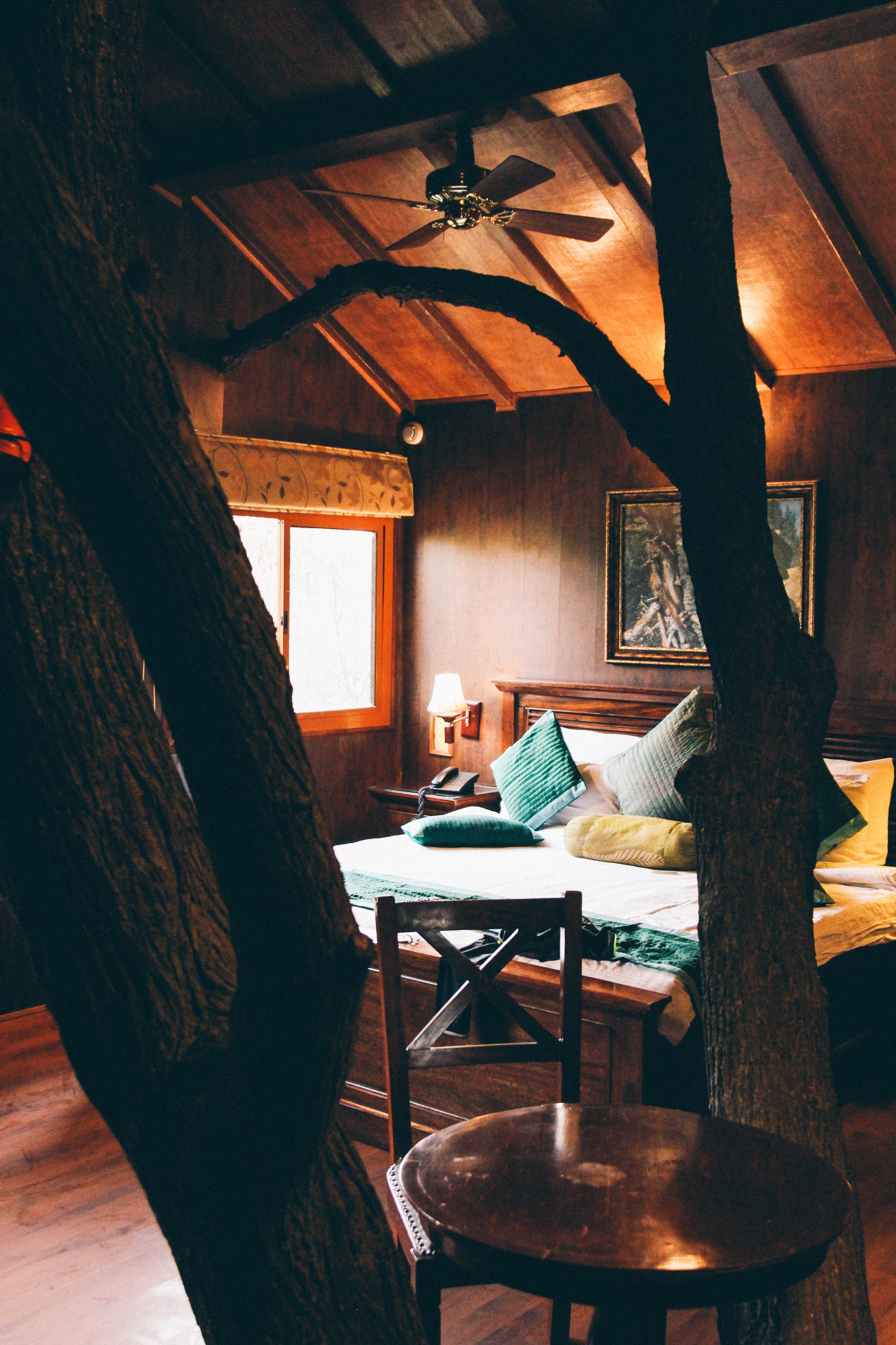 Tree House Resort, Jaipur